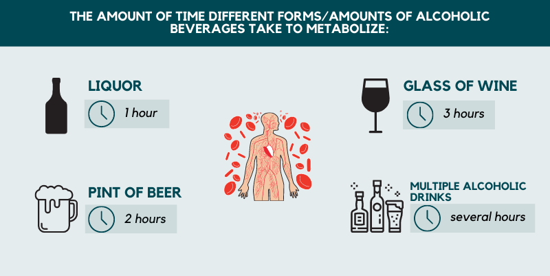 Time of alcoholic metabolism